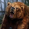 Grizzly_bear2